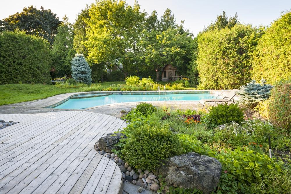 La haie autour de la piscine loisir jardin - Loisir jardin ...