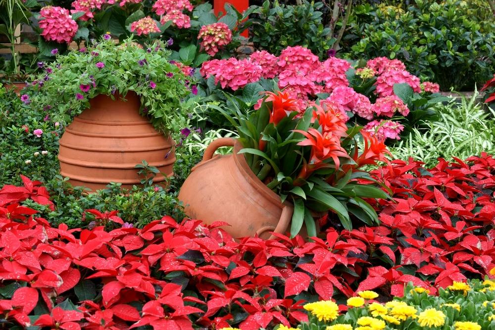 Bien choisir les contenants pour vos plantes loisir jardin for Choisir plantes jardin