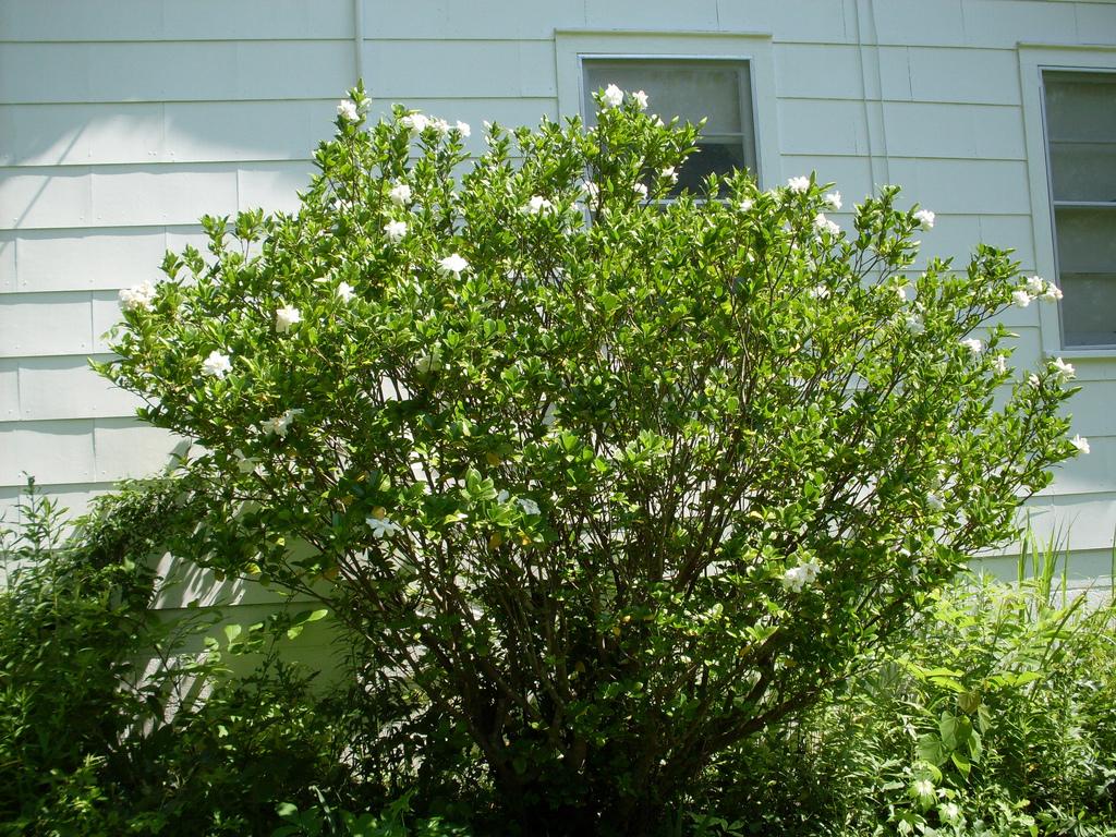 Le bon emplacement de vos arbustes loisir jardin for Arbustes de jardin