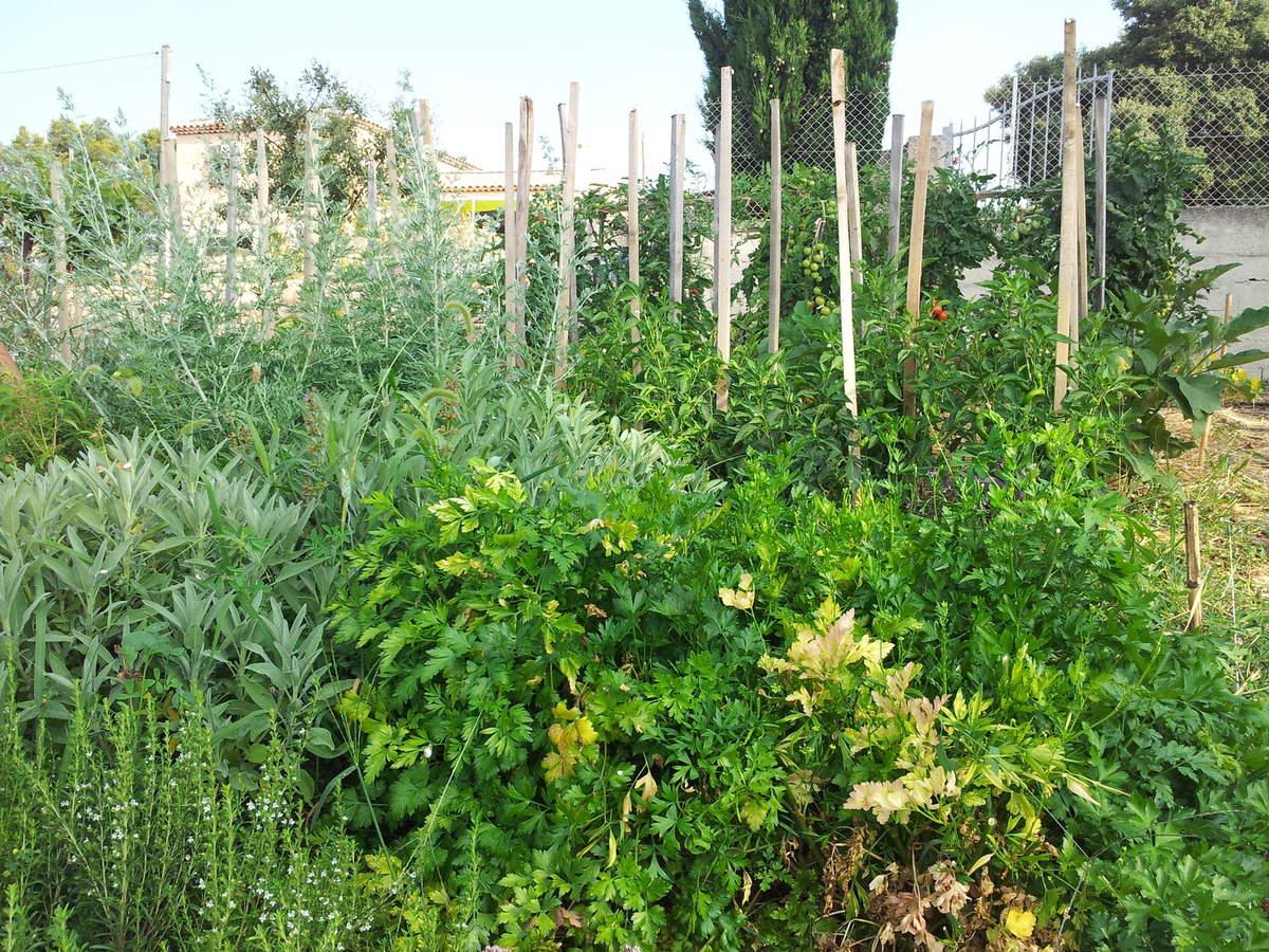 cultiver des plantes aromatiques dans son jardin loisir. Black Bedroom Furniture Sets. Home Design Ideas