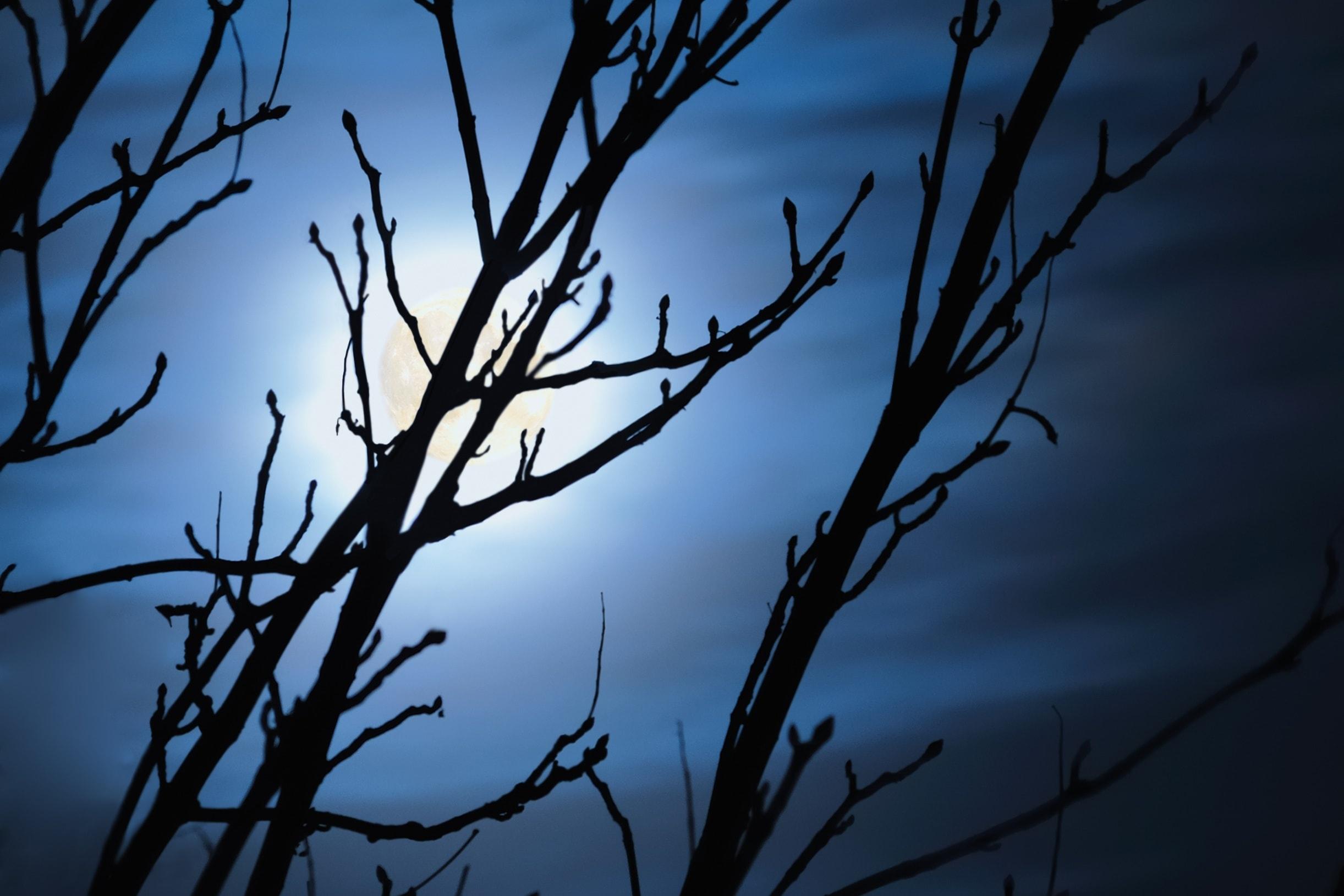 Comment pratiquer le jardinage avec l influence de la lune loisir jardin - Comment jardiner avec la lune ...
