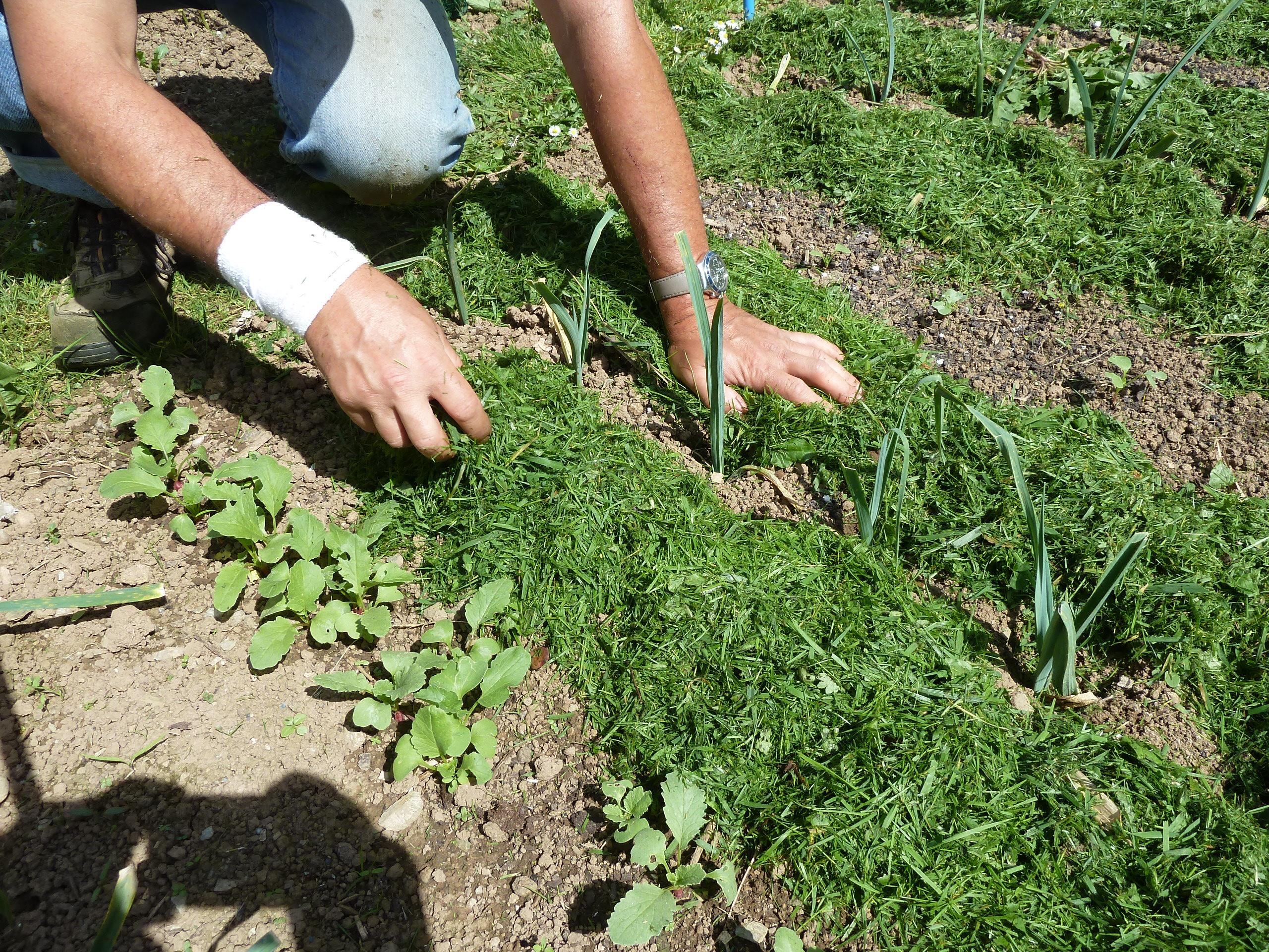 Conseils jardin Jardinage Loisir Jardin