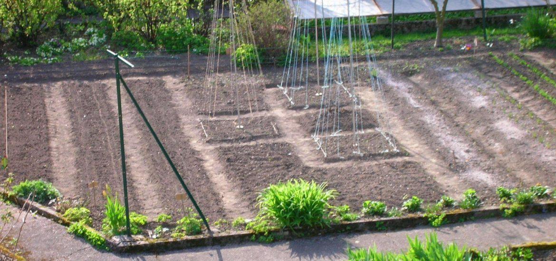 Conseils pour le jardin avec Loisir-Jardin.fr